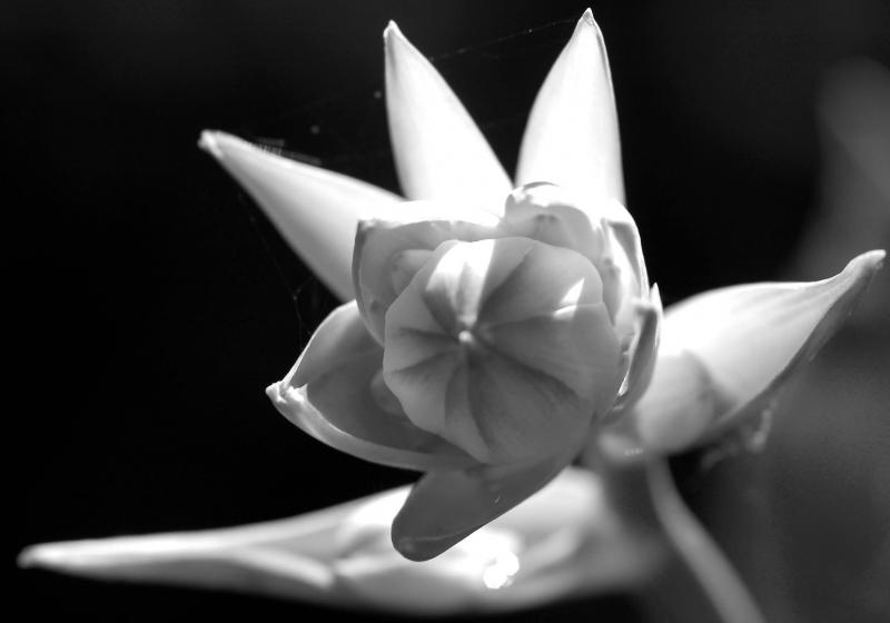 BLACKWHITEGRAY MATTERS - PHOTO