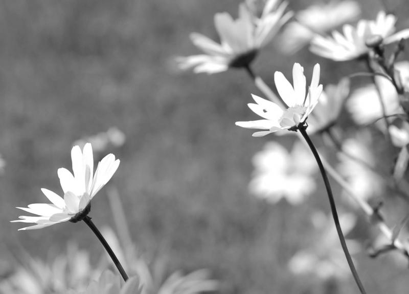 FIELDS OF FLOWERS - PHOTO