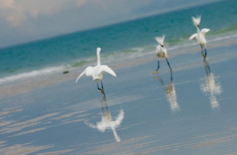 BEACH BIRD BOOGIE - PHOTO