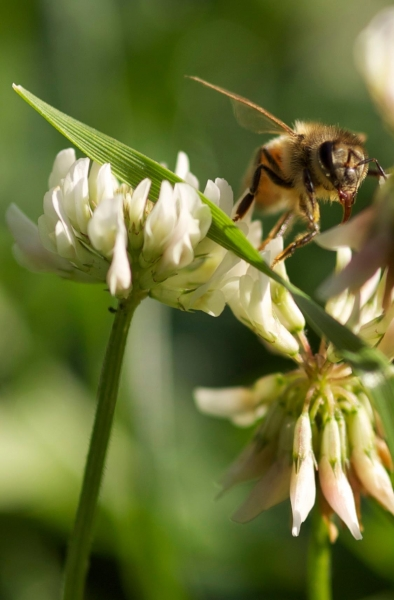 BUSY BEEING - PHOTO