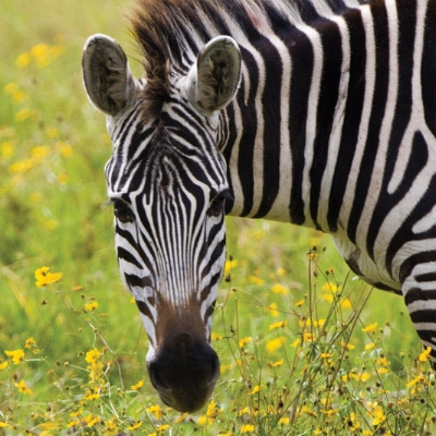 Southern Africa tours from $