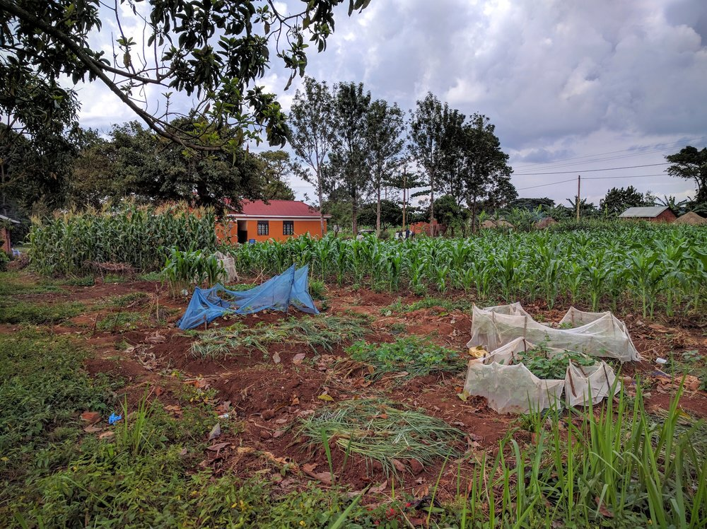 Seeing the crops growing next to Immanuel Home and learning from James (who farms the land) how it works, what his needs are and how he's teaching the kids