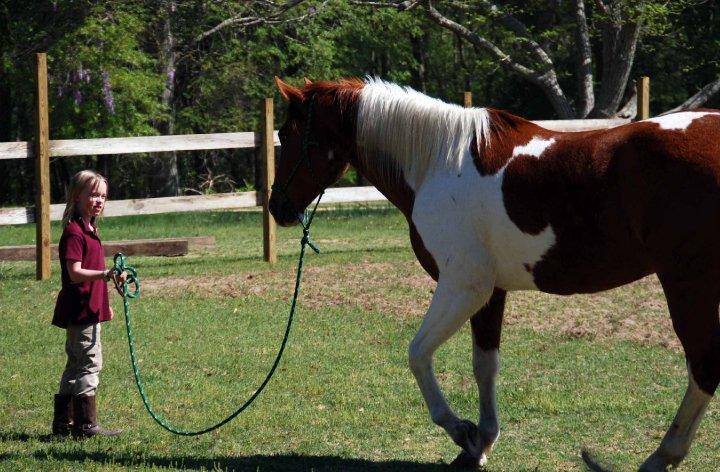 horse training 2.jpg