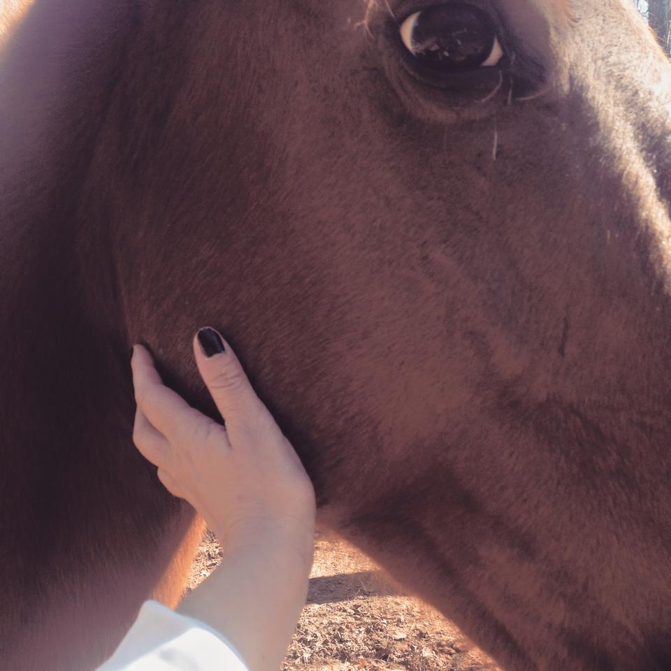 Would you like to experience being with horses in a new way?