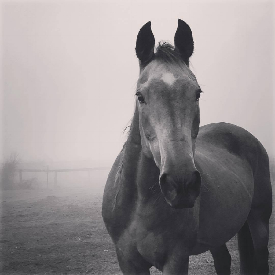 Harmony - Connect With The Pure Positive Energy Of Horses