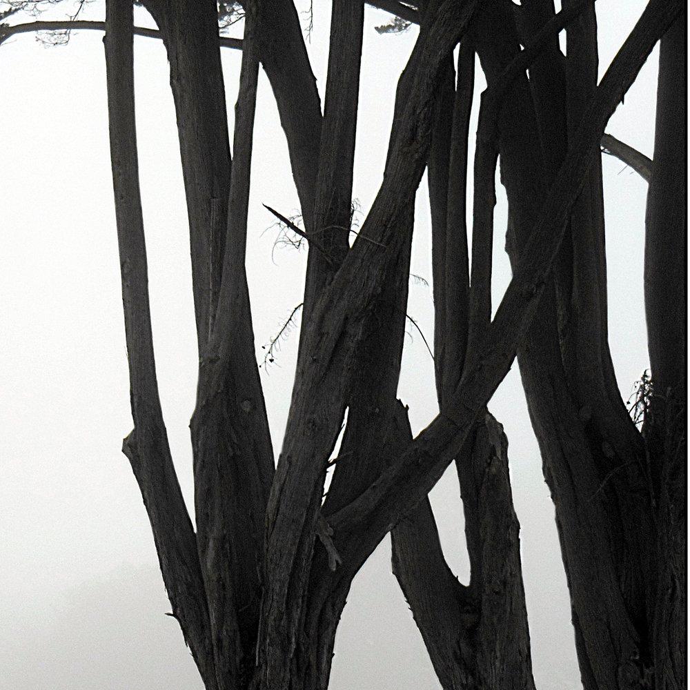 Coastal Trees 2