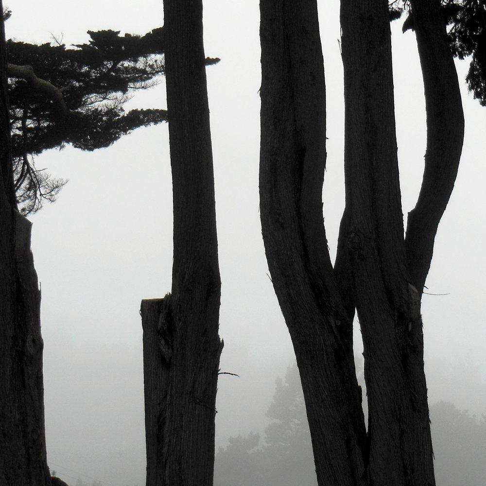 Coastal Trees 5