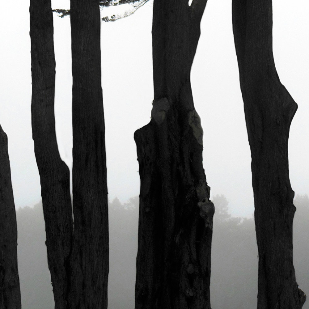 Coastal Trees 6
