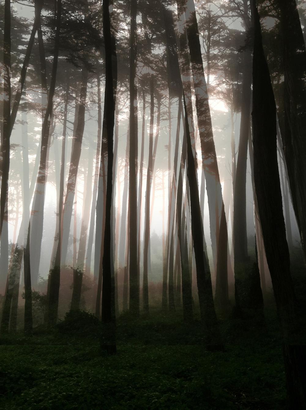 Presidio Fog 1