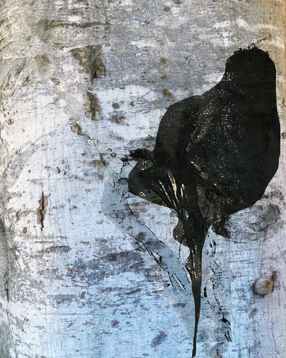 Birch and Black
