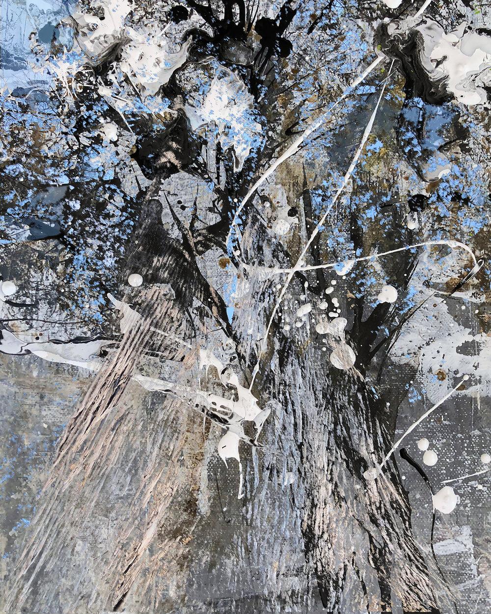Birch, Black and Blue