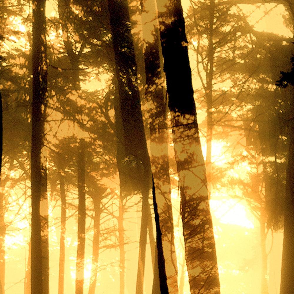Presidio Yellow Fog