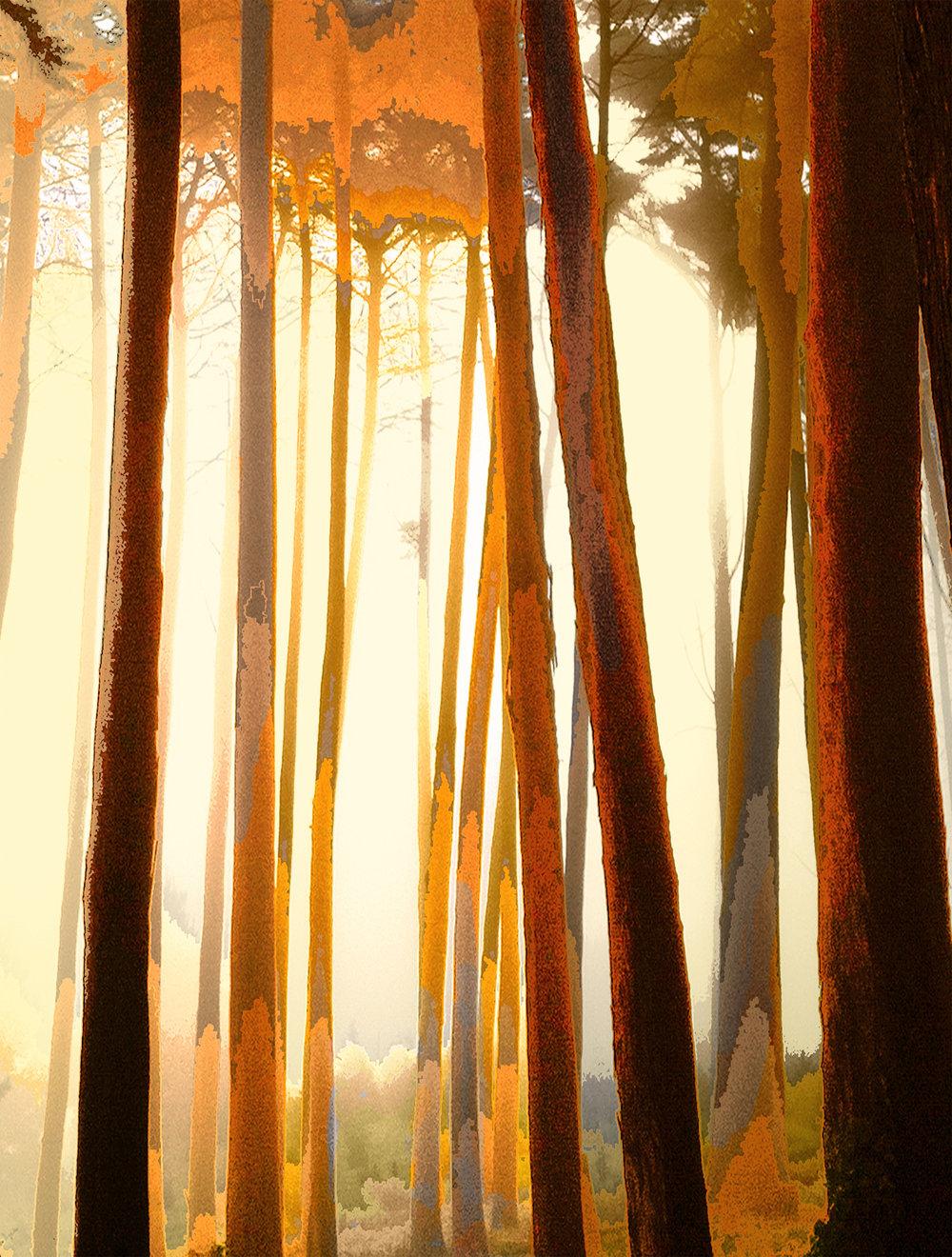 Tangerine Trees