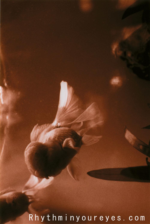 film-078.jpg