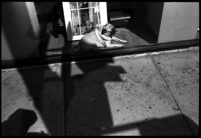 Black and White Photograph: Dog in the Window, Chinatown, San Francisco