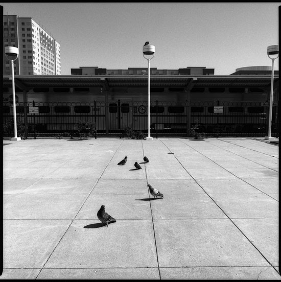 Black and White Photographs: Birds, Townsend Street, San Francisco, California.