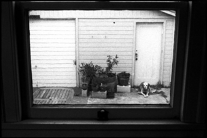0227_00 black and white photograph, hound dog through the window, oakland ca