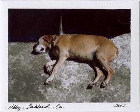 p20120512_09 polaroid; abby they dog, oakland, california, 2012