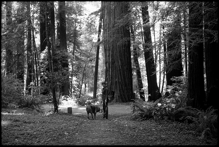 0237_0A Black and White Photograph - Redwoods, Mendocino, August of 2012