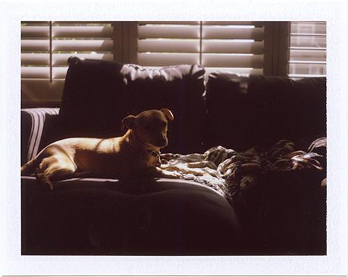 p20130617_09 polaroid, small dog, san francisco, 2013