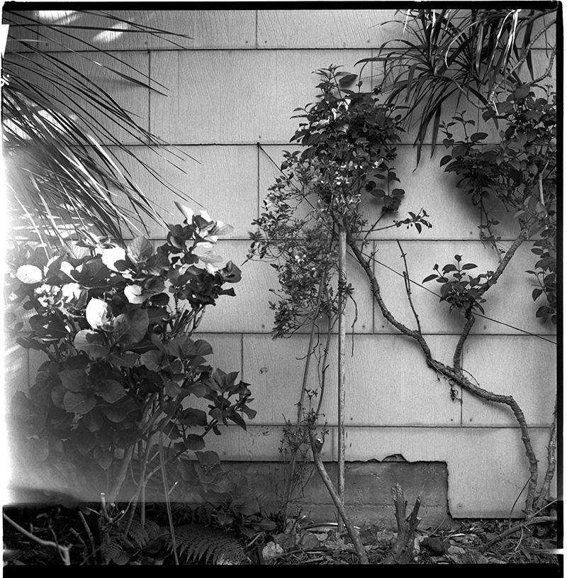 660125_08-09 San Francisco, Garden
