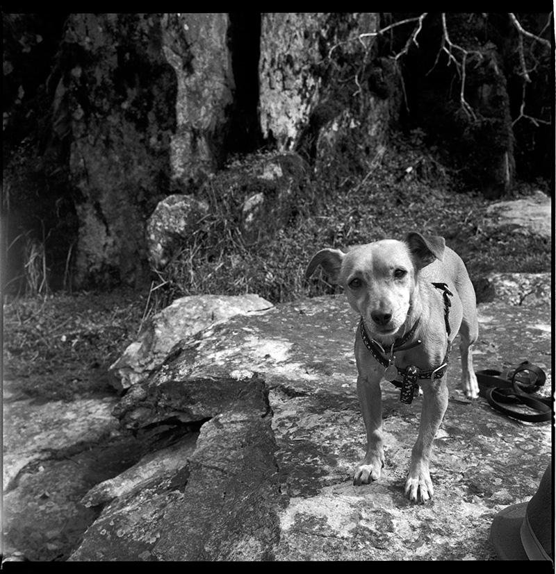 660126_17 Frida The Wonder Dog