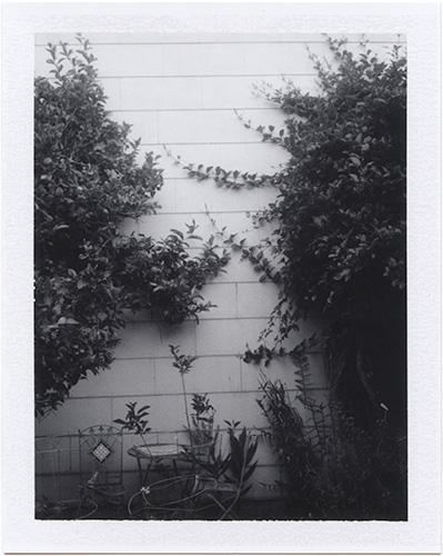 p20140429_09 garden, san francisco