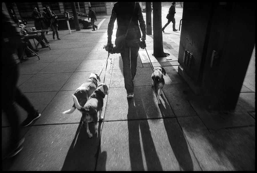 0331_16 Dog Walker, Third Street, San Francisco