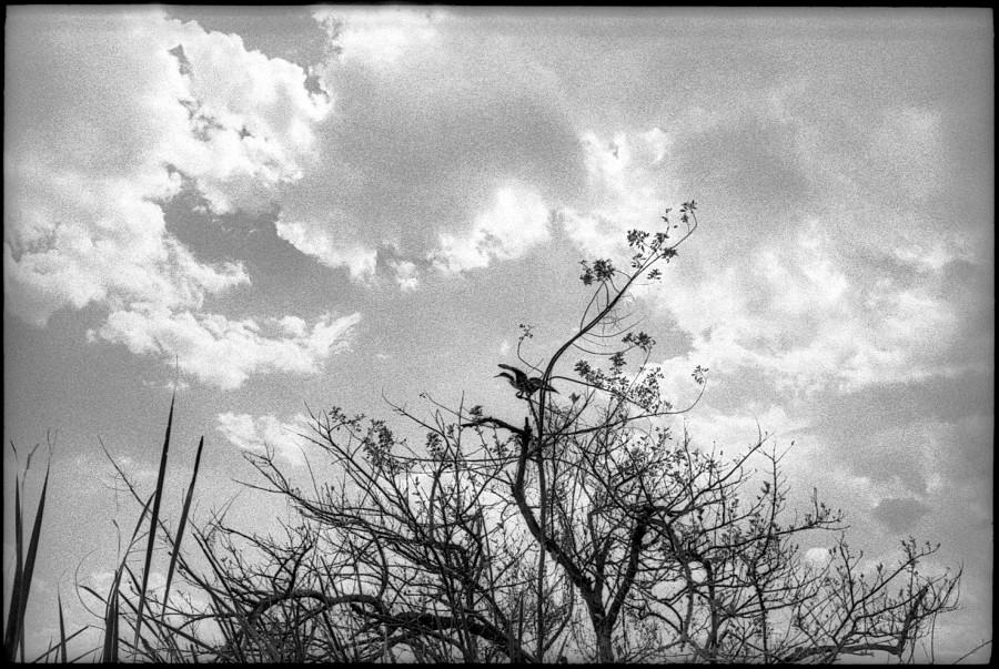 0346_02A Trees, Bird, Immokalee South Florida