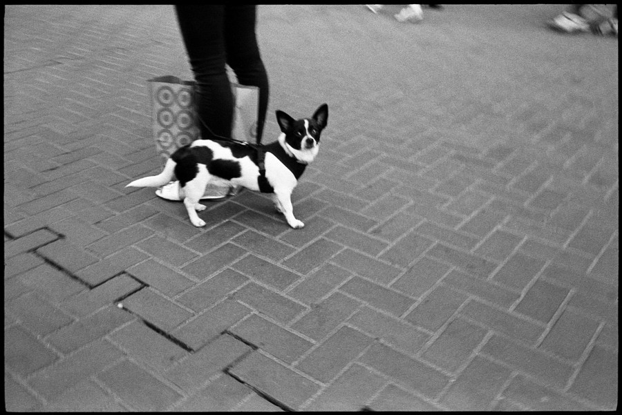 0367_09A Dog On Market Street San Francisco
