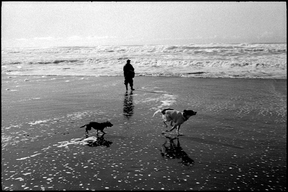 0419_28A Dogs, Ocean Beach, San Francisco
