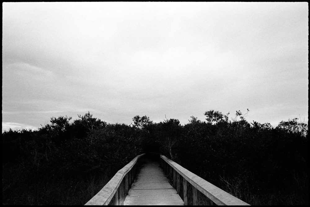 0422_02A Big Cypress, Florida Everglades