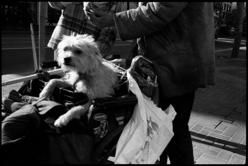 #0435_30A - Drug Deal & Dog, Mid-Market Street. San Francisco, CA. March 2016. Leica M2, Zeiss 35mm f/2, Ilford HP5 400.
