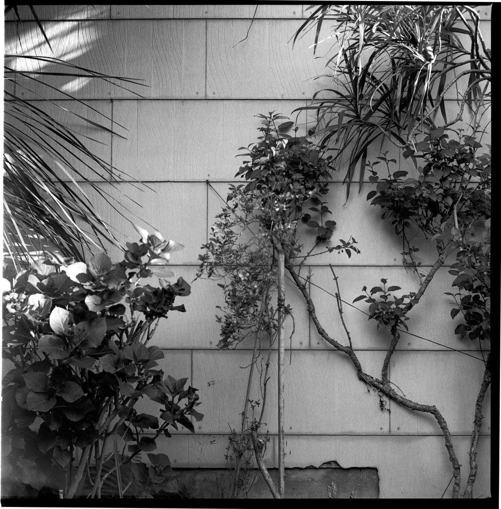 "#660125_10 - North garden wall. San Francisco, California / 2014   Excerpts from the book  ""Fragments""    Signed Copies   On Demand @Blurb   Online Shop"
