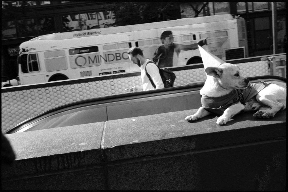 Show Dog, Market Street.  San Francisco, 2018.   Gallery Archive >