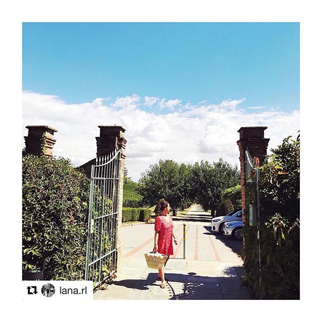#Repost @lana.rl fitting beautifully into the vineyard surroundings with her lovely Small bag in Forest Mushroom & Pale Jasmine ・・・ ❤️ from these gorgeous vineyards 🇮🇹🍇 - - - - - -  #beachbag #beach #wickerbasket #wickerbag #vineyard #italy  #handbag #handmade #style #london #morocco #shop #summer #blogger #fblogger  #fashion #palmleaf #onlineshop #startup #pompom #monogram #palm #holiday