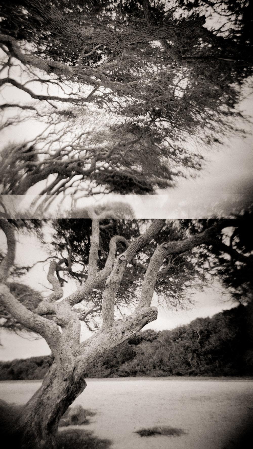 ANASTASIA TREES CIRCA 2008