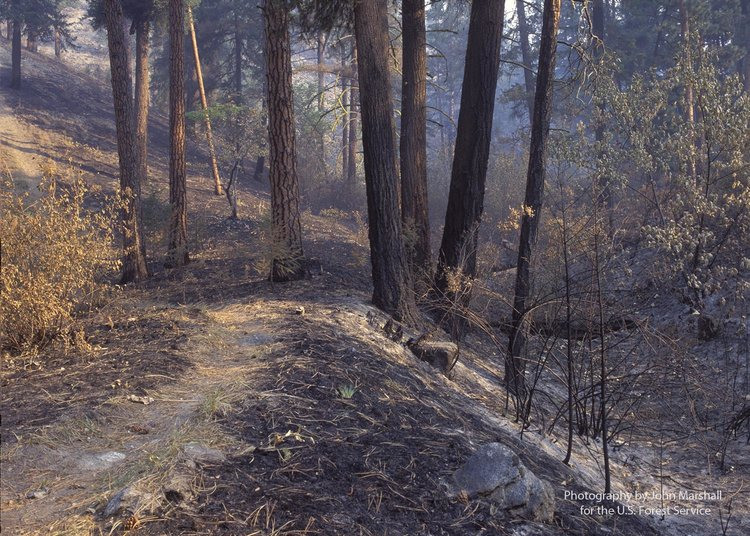 Have there been any fires in Wenatchee National Forest?