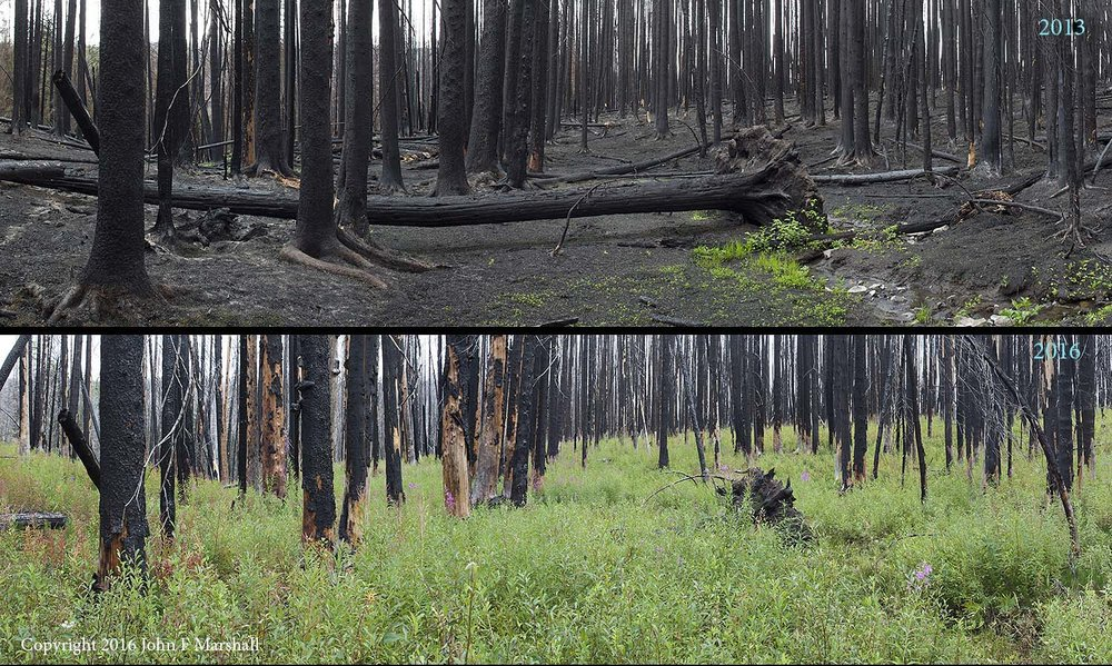 NNMW-6 was taken as a composite panorama using a 45mm Tilt/Shift lens.  Here you can compare the image I took on June 18, 2013 with the one I did on September 7, 2016. The log is Engelmann spruce.  The predominant plant in the 2016 photo is a species of willow. Fireweed is also abundant.  There are many lodgepole pine seedlings hidden among the taller plants. This is a wet area where the fire did not burn real hot.