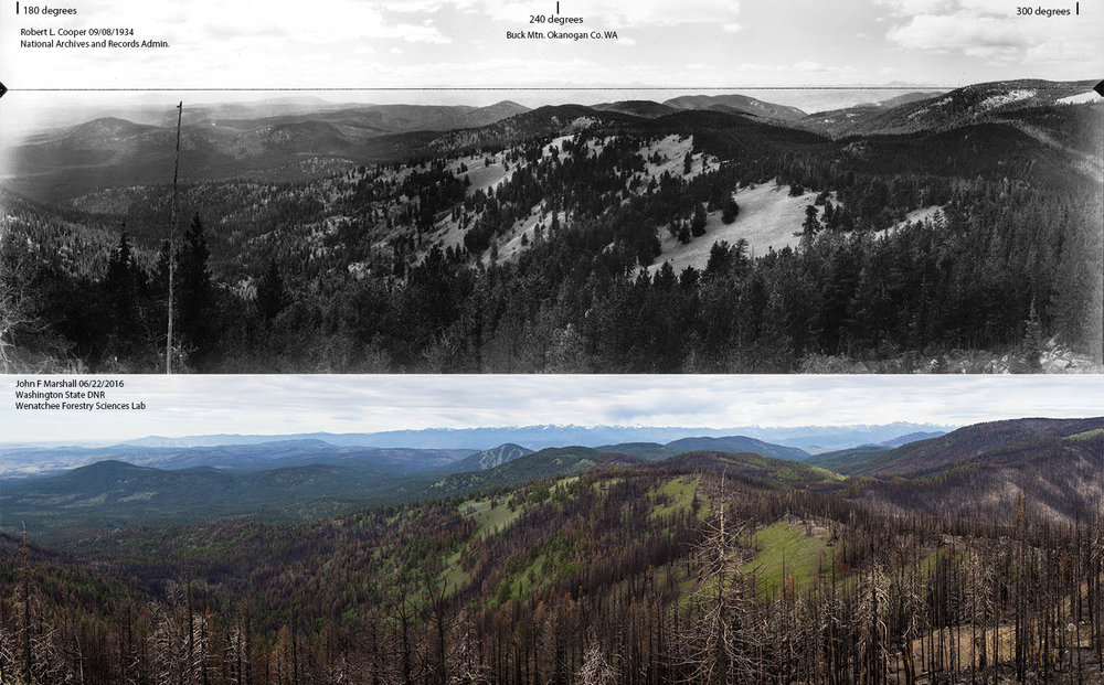 Here is the photo comparison.  Thanks to Washington Department of Natural Resources and Wenatchee Forestry Sciences Lab for supporting this project!