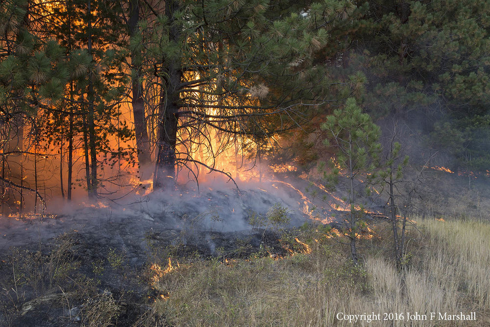 Prescribed Fire along U.S. 97.  When someone throws out a cigarette next summer, it will be easier to contain the fire.