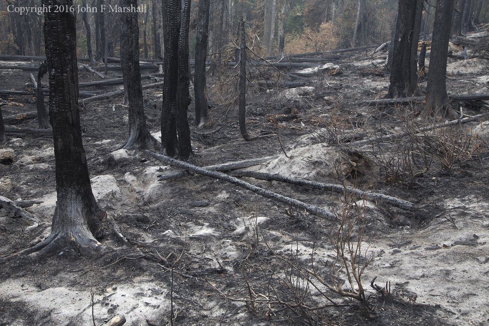 The white ash marks areas where the fire burned deep into the soil.  Mixed in are pockets that were only lightly touched.