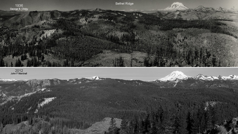 The black and white comparison makes evident, just how much more varied the landscape was in 1936, than in 2012.