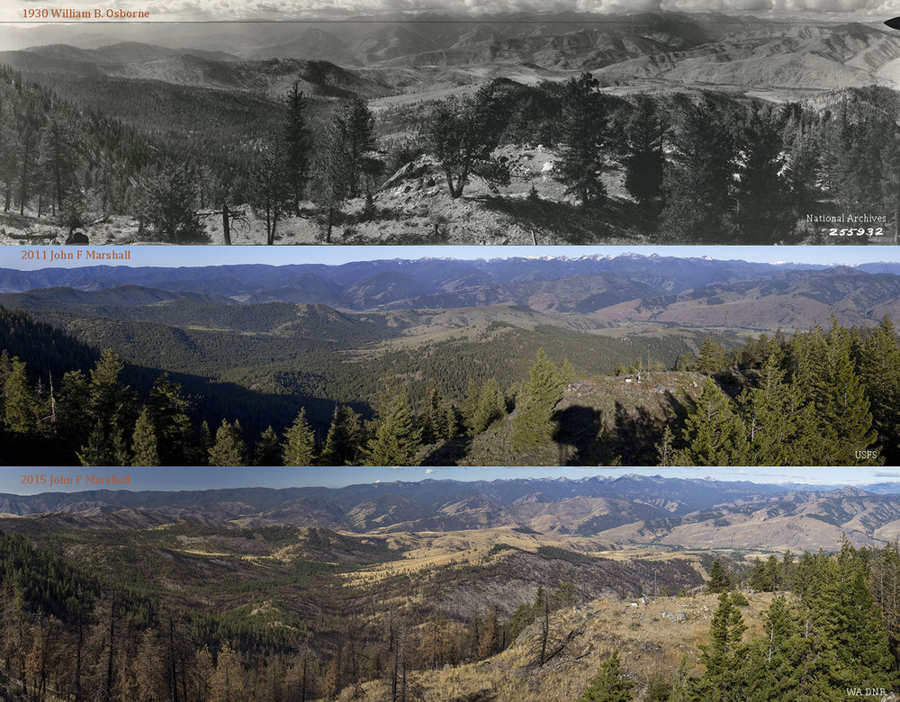 Top Photo Willam B. Osborne 1930, from National Archives and Records Administration, Seattle, WA.  Middle Photo 2011 by John F Marshall funded by Okanogan-Wenatchee National Forest and Wenatchee Forestry Sciences Lab of Pacific NW Research Station.  Bottom Photo 2015 by John F Marshal, funded Washington Department of Natural Resources.