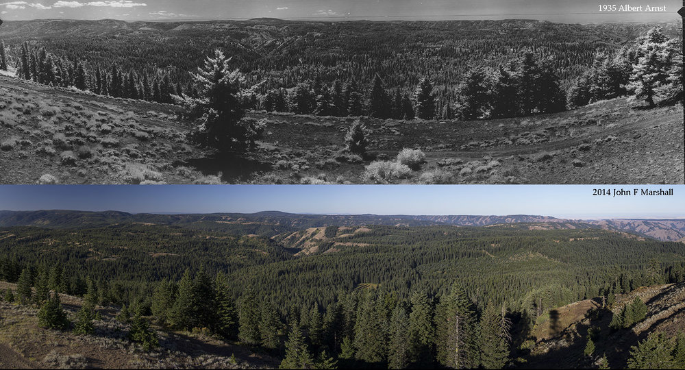 1935 USFS photo by Albert Arnst from the National Archives and Records Administration, Seattle, WA.  Bottom photo by John F Marshall from 2014 funded by Umatilla National Forest through Wenatchee Forestry Sciences Lab.
