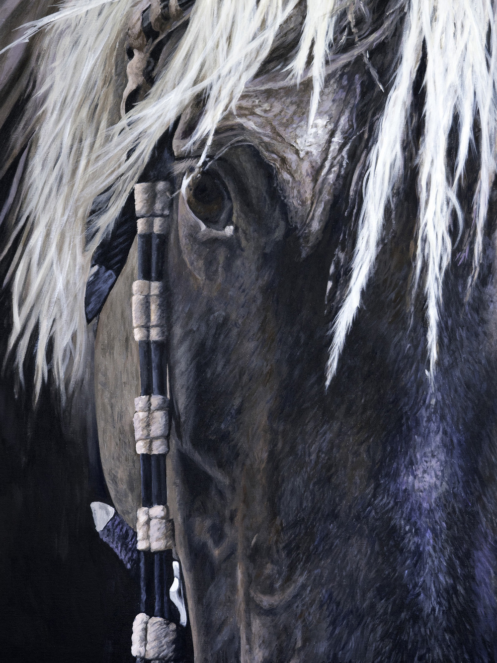 CHIEF, Rocky Mountain Horse
