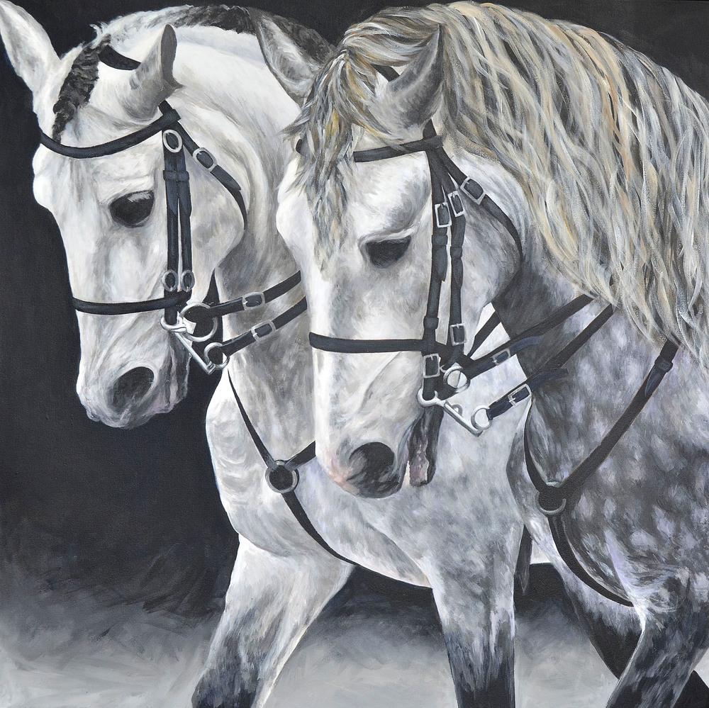 Dapple Greys, Lusitano Stallions