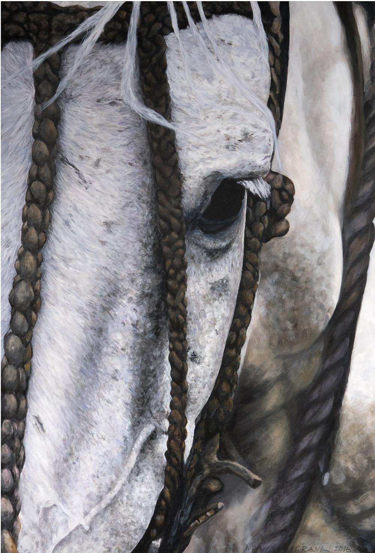 Patagonia Grey VI