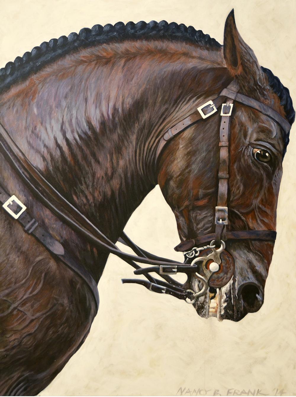 Trojan Horse/Lusitano Stallion
