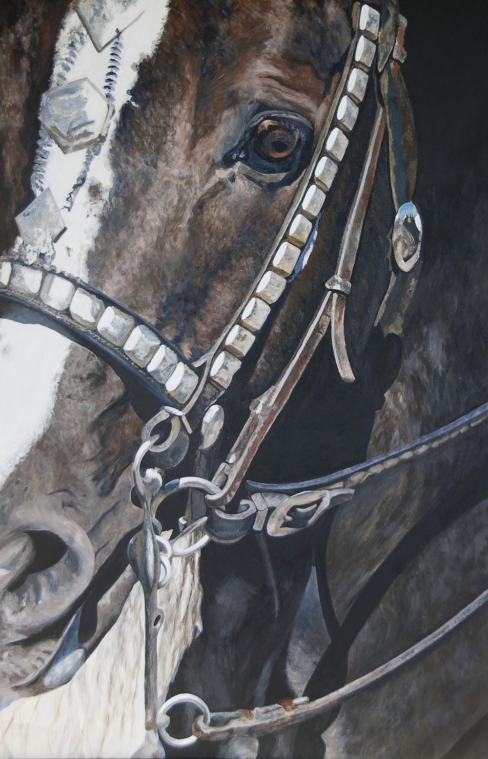 Morgan Stallion